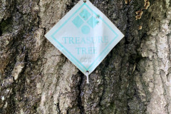 008_Willow-Oak_Treasure-Tree-Tag_Updated-photo-2020.jpg