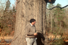 015_Black-Oak_Trunk-with-person_Orginal-photo