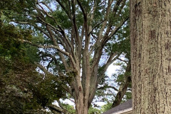 027_Willow-Oak_Canopy_Updated-photo-2019