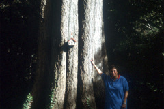 027_Willow-Oak_Trunk-with-adjacent-man_Original-Photo