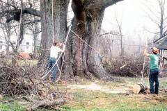 031_Willow-Oak_Demolition-crew_Original-Photo