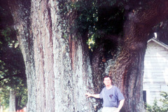 031_Willow-Oak_Trunk-Size_Original-Photo