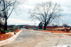 032_Bur-Oak_Side-of-construction-road_Original-Photo