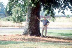 032_Bur-Oak_Trunk_Original-Photo