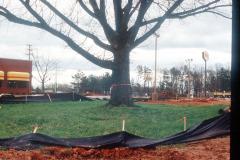 032_Bur-Oak_With-new-Denny_s_Original-Photo