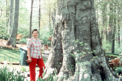 033_American-Beech_Trunk-with-woman_Original-Photo