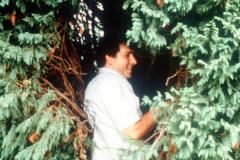 059_Leyland-Cypress_Foliage-with-man_Original-Photo