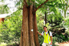 060_Dawn-Redwood_Trunk-with-Chris-Chao_Updated-photo-2020