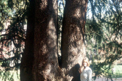 061_Deodar-Cedar_Trunk-with-woman_Original-Photo