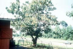 063_Royal-Paulowina_Whole-tree-and-highway_Original-Photo