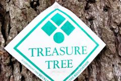 071_Deodar-Cedar_Treasure-Tree-Plaque_Updated-photo-2020