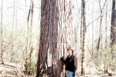 073_Eastern-Cottonwood_Trunk-with-woman_Original-photo