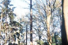 081_Bald-Cypress_Entire-tree-dormant_Original-photo