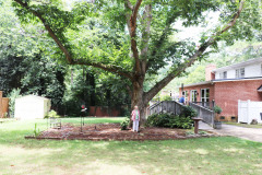 086_Chinese-Chestnut_Entire-Tree-with-Edith-Rowe_Updated-photo-20201