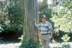 097_Eastern-Red-Cedar_Trunk-with-man_Original-photo