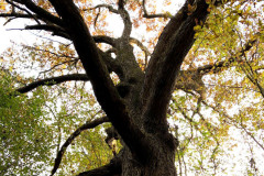 110_Post-Oak_Canopy_Updated-photo