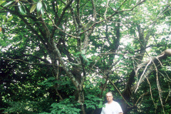 113_Red-Mulberry_Entire-tree-with-man_Original-photo