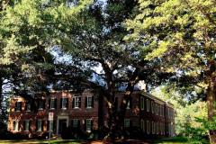 087_Laurel-Oak_Entire-Tree_Updated-photo-2020