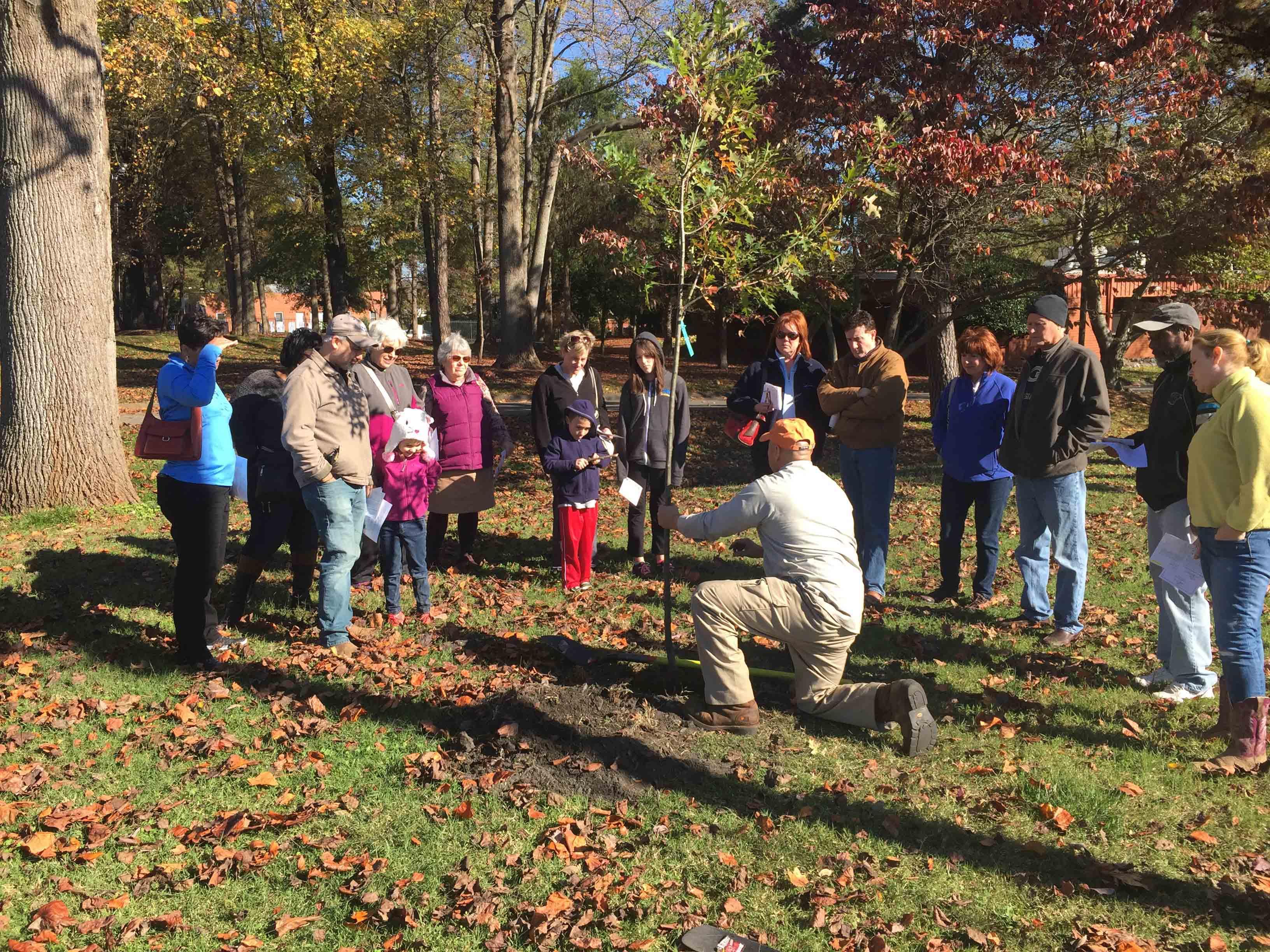 2015 Fall TreeStore_2753