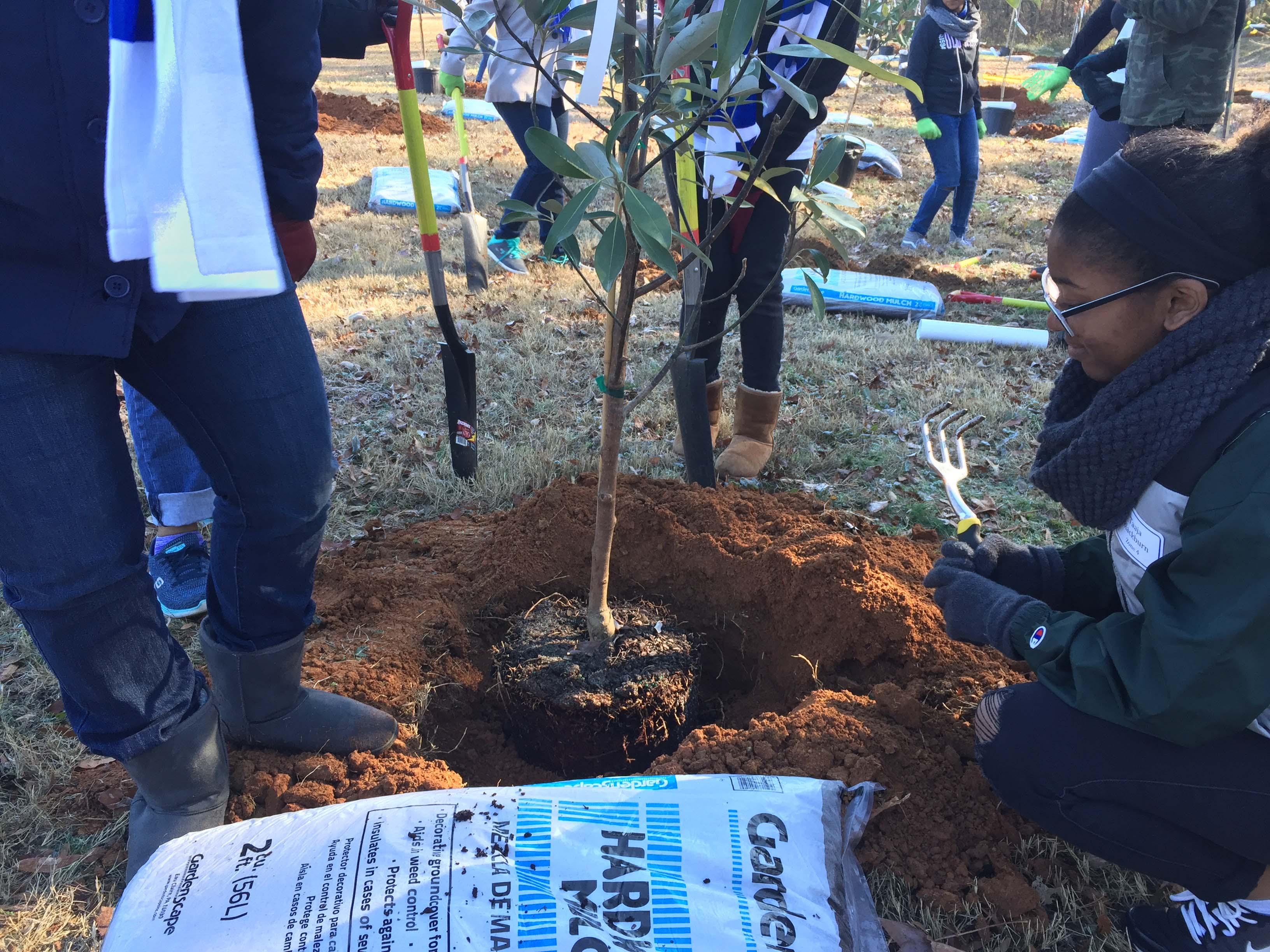 Hornets_Nest_Elementary_TreeDay_2016-12-10_7394