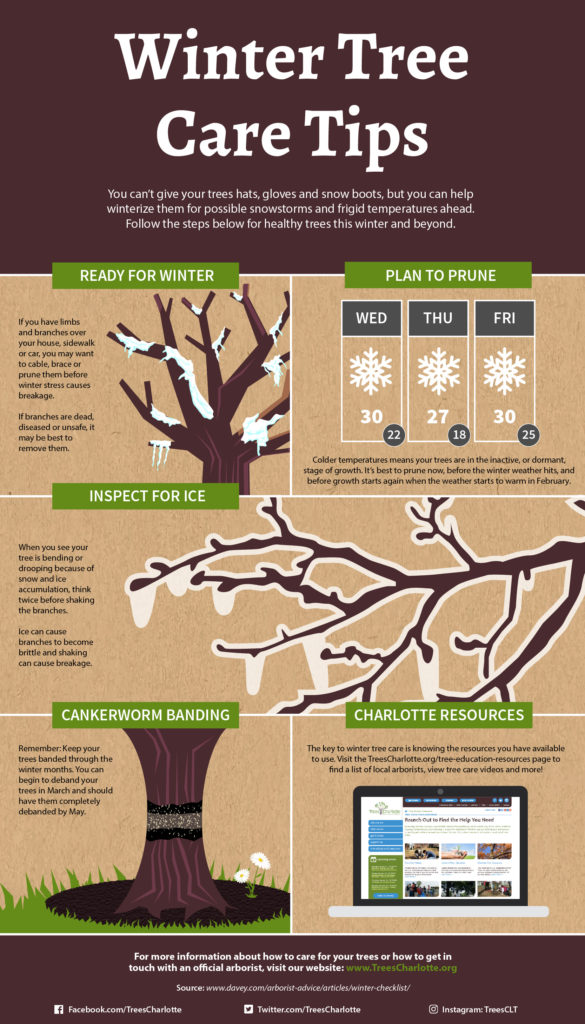 winter-tree-care-infographic_forweb-01