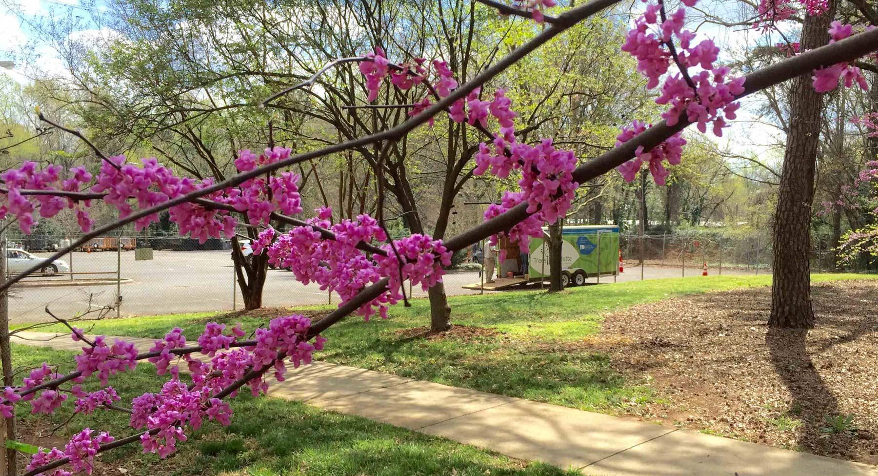 TreesCharlotte Arbor Week City-Wide Treestore