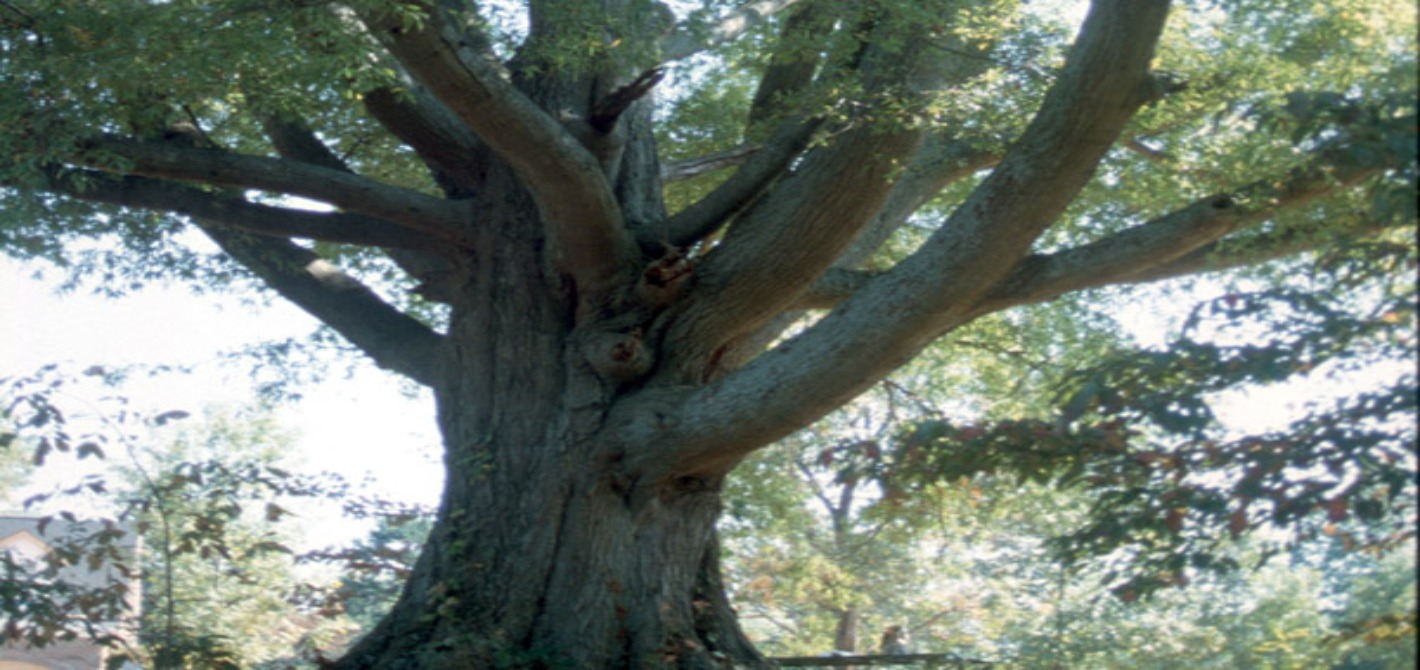 008_Willow Oak_Cover photo