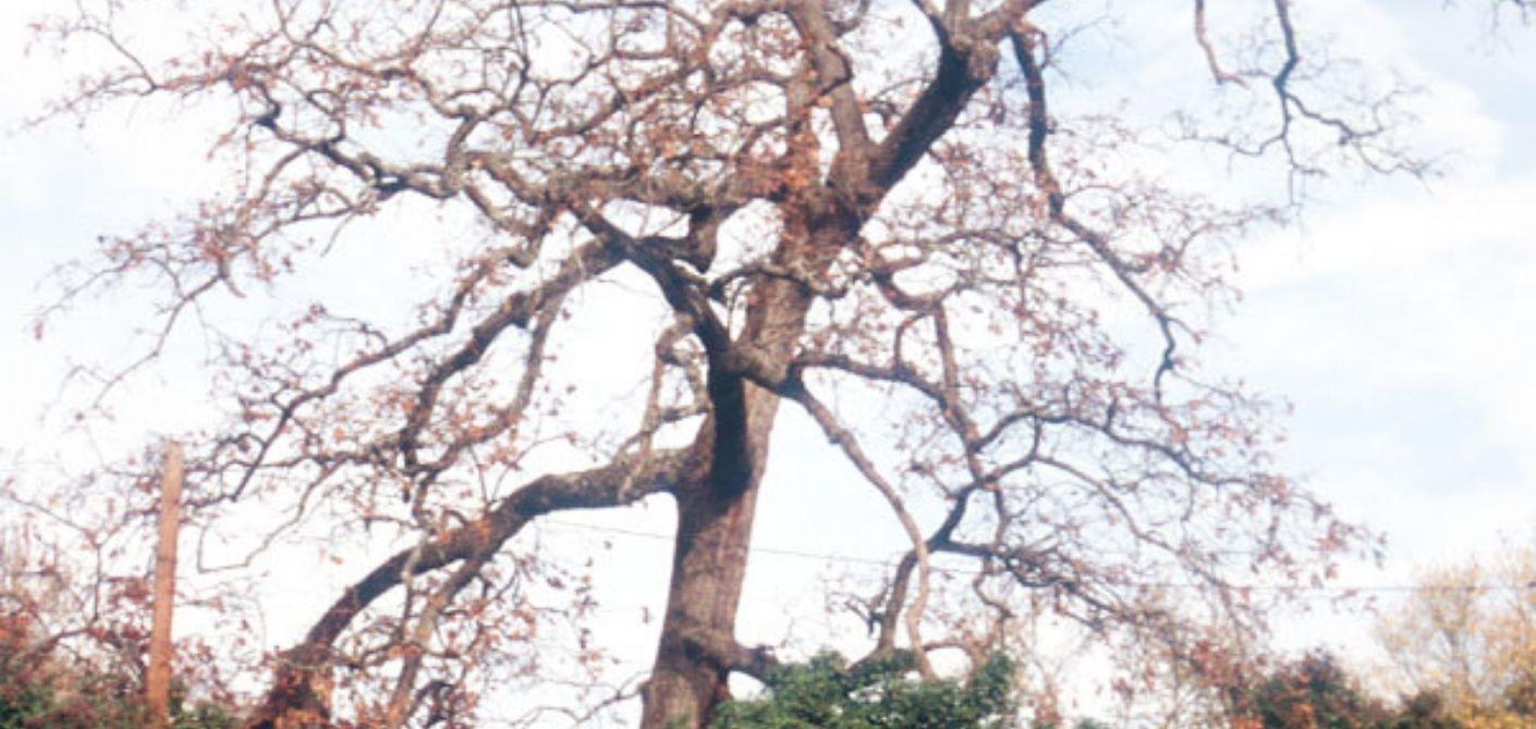 070 Post Oak