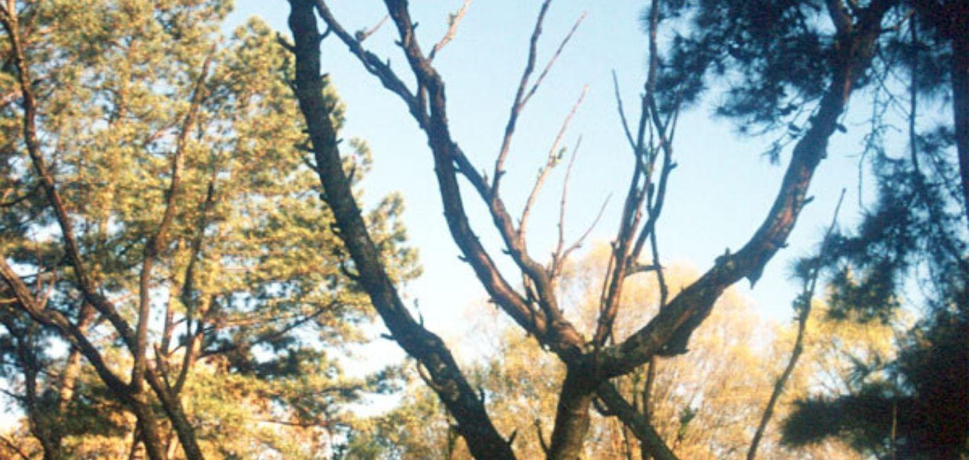 078 Devil's Stick