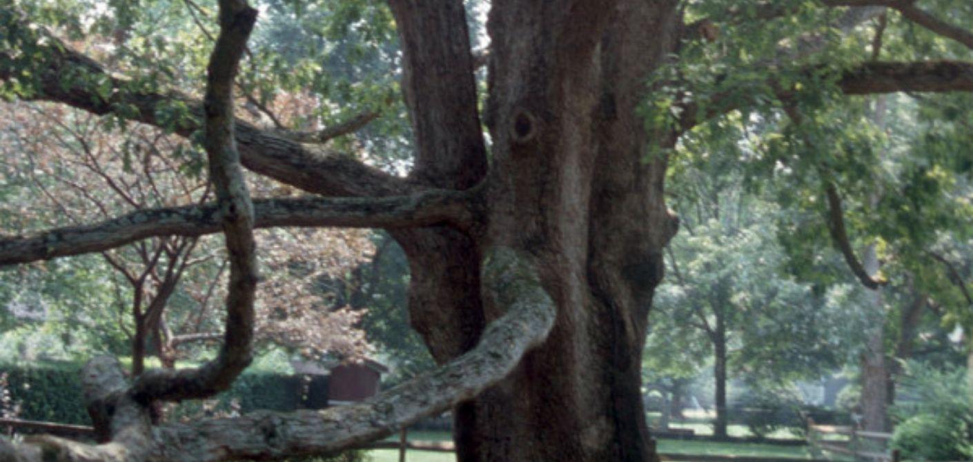 094 White Oak