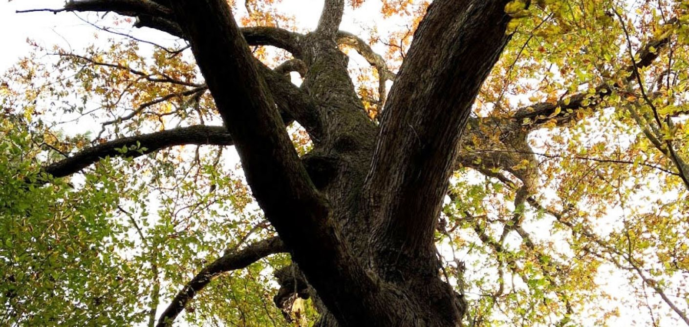 110 post oak