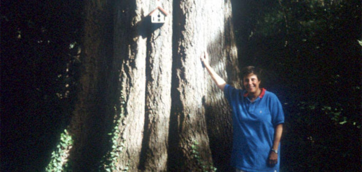 27 Willow Oak