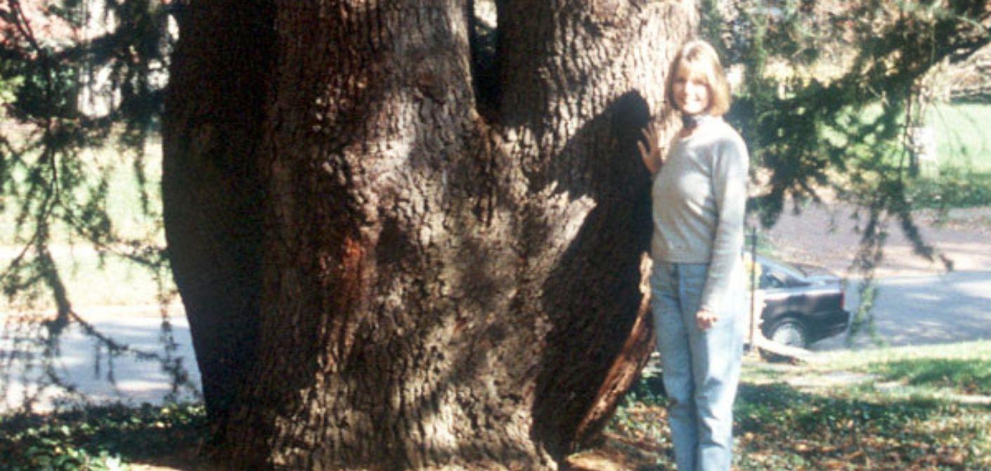 61 Deodar Cedar