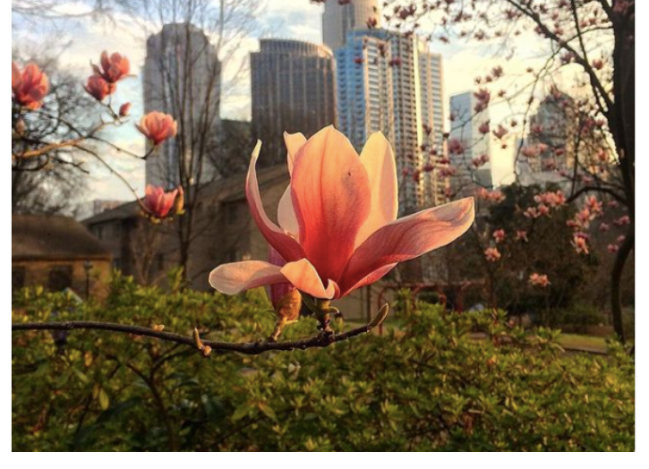 Magnolia-home page (1)